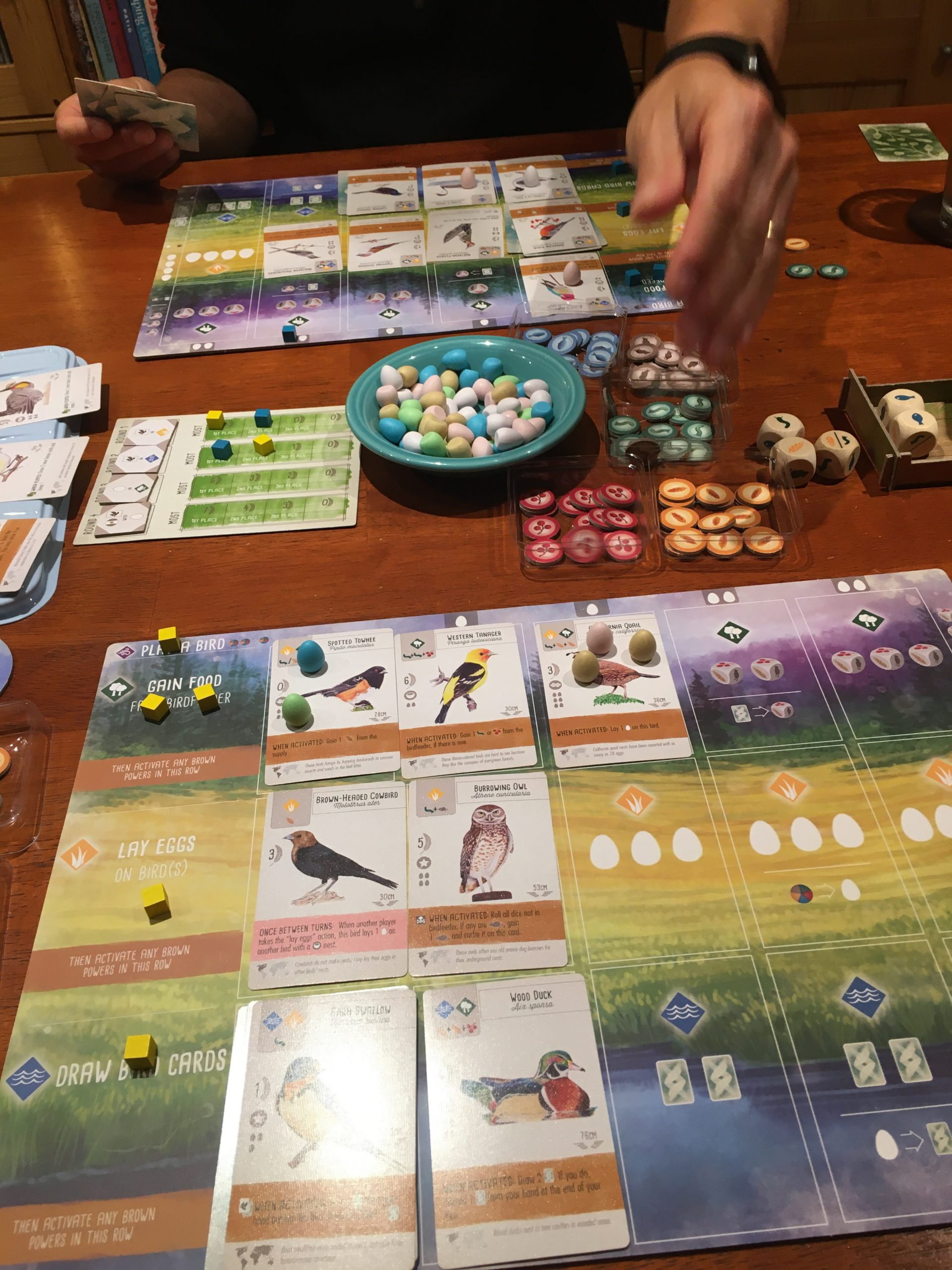 Wingspan game being played, with playing boards, bird cards, eggs, food resources, action cubes and food dice